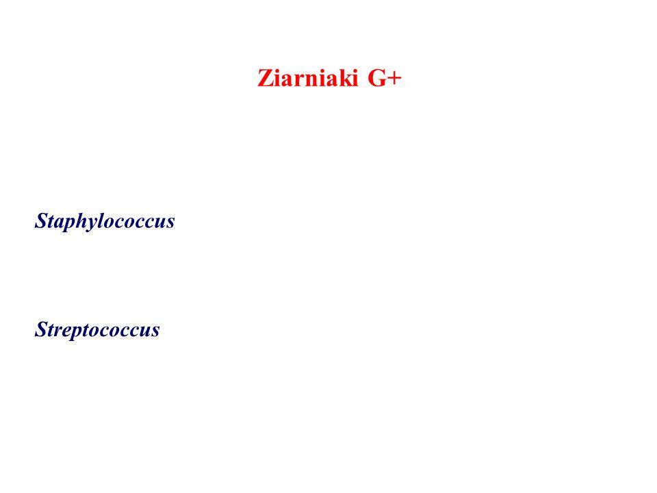 Ziarniaki G+ Staphylococcus Streptococcus