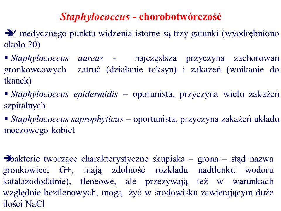 Staphylococcus - chorobotwórczość  Z medycznego punktu widzenia istotne są trzy gatunki (wyodrębniono około 20)  Staphylococcus aureus - najczęstsza przyczyna zachorowań gronkowcowych zatruć (działanie toksyn) i zakażeń (wnikanie do tkanek)  Staphylococcus epidermidis – oporunista, przyczyna wielu zakażeń szpitalnych  Staphylococcus saprophyticus – oportunista, przyczyna zakażeń układu moczowego kobiet  bakterie tworzące charakterystyczne skupiska – grona – stąd nazwa gronkowiec; G+, mają zdolność rozkładu nadtlenku wodoru katalazododatnie), tleneowe, ale przezywają też w warunkach względnie beztlenowych, mogą żyć w środowisku zawierającym duże ilości NaCl