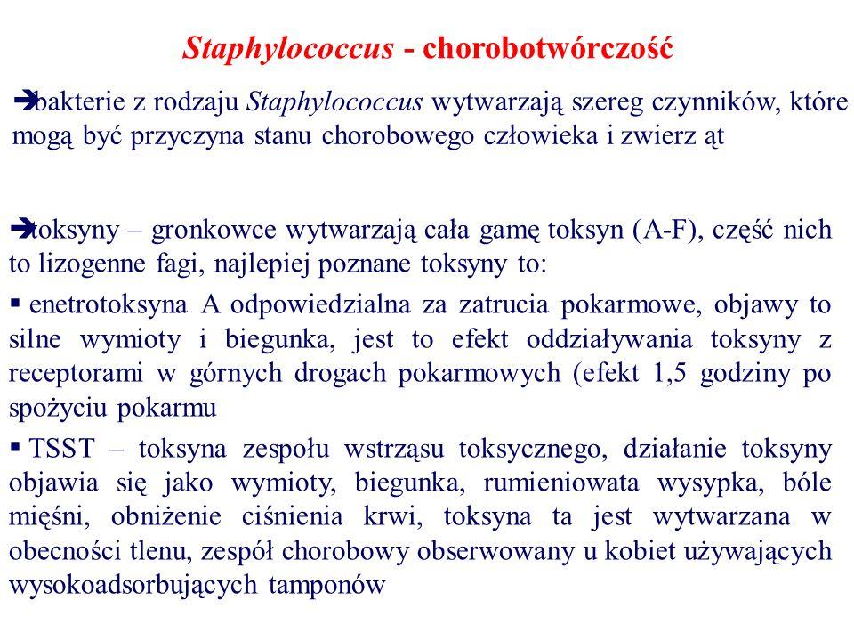 Staphylococcus - chorobotwórczość  bakterie z rodzaju Staphylococcus wytwarzają szereg czynników, które mogą być przyczyna stanu chorobowego człowieka i zwierz ąt  toksyny – gronkowce wytwarzają cała gamę toksyn (A-F), część nich to lizogenne fagi, najlepiej poznane toksyny to:  enetrotoksyna A odpowiedzialna za zatrucia pokarmowe, objawy to silne wymioty i biegunka, jest to efekt oddziaływania toksyny z receptorami w górnych drogach pokarmowych (efekt 1,5 godziny po spożyciu pokarmu  TSST – toksyna zespołu wstrząsu toksycznego, działanie toksyny objawia się jako wymioty, biegunka, rumieniowata wysypka, bóle mięśni, obniżenie ciśnienia krwi, toksyna ta jest wytwarzana w obecności tlenu, zespół chorobowy obserwowany u kobiet używających wysokoadsorbujących tamponów