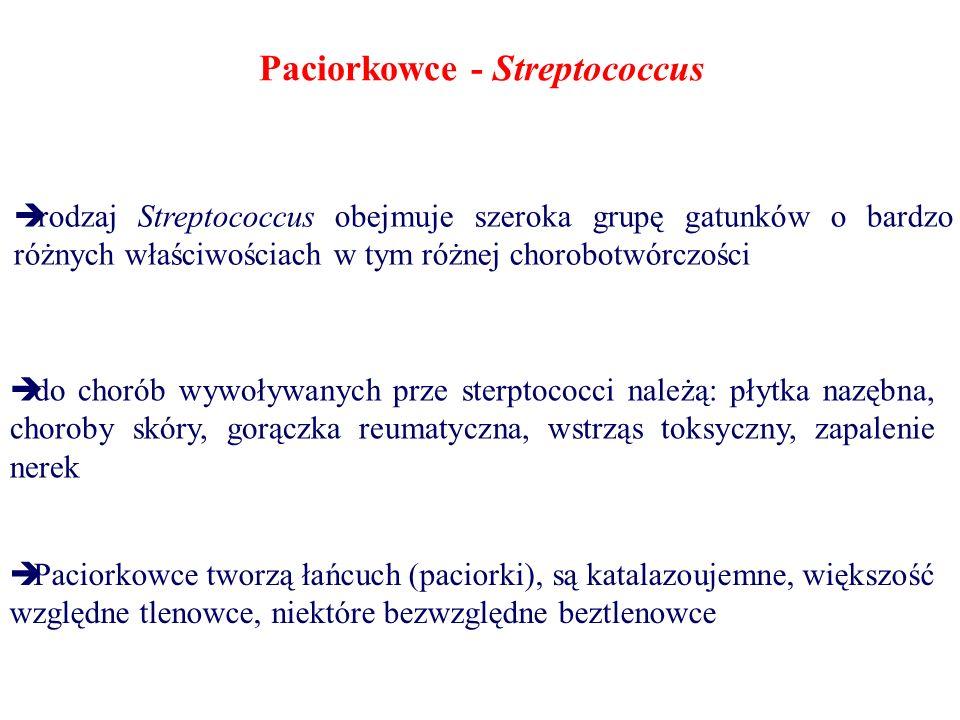 Paciorkowce - Streptococcus  rodzaj Streptococcus obejmuje szeroka grupę gatunków o bardzo różnych właściwościach w tym różnej chorobotwórczości  do chorób wywoływanych prze sterptococci należą: płytka nazębna, choroby skóry, gorączka reumatyczna, wstrząs toksyczny, zapalenie nerek  Paciorkowce tworzą łańcuch (paciorki), są katalazoujemne, większość względne tlenowce, niektóre bezwzględne beztlenowce