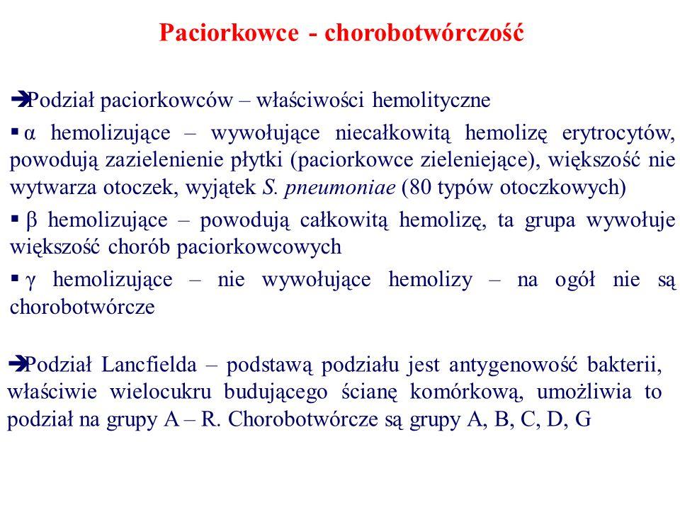 Paciorkowce - chorobotwórczość  Podział paciorkowców – właściwości hemolityczne  α hemolizujące – wywołujące niecałkowitą hemolizę erytrocytów, powodują zazielenienie płytki (paciorkowce zieleniejące), większość nie wytwarza otoczek, wyjątek S.