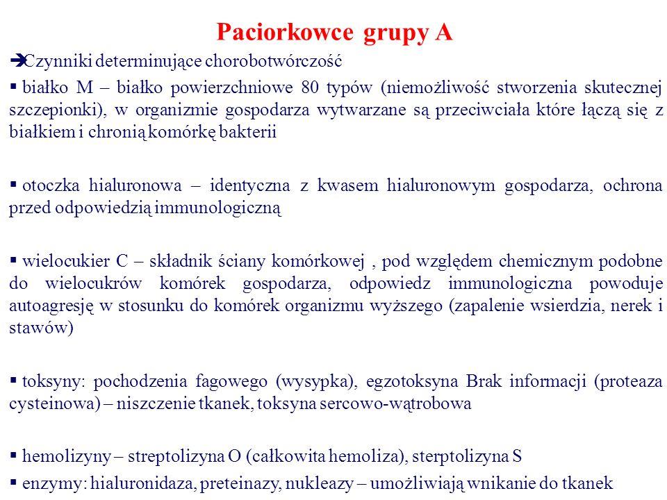 Paciorkowce grupy A  Czynniki determinujące chorobotwórczość  białko M – białko powierzchniowe 80 typów (niemożliwość stworzenia skutecznej szczepionki), w organizmie gospodarza wytwarzane są przeciwciała które łączą się z białkiem i chronią komórkę bakterii  otoczka hialuronowa – identyczna z kwasem hialuronowym gospodarza, ochrona przed odpowiedzią immunologiczną  wielocukier C – składnik ściany komórkowej, pod względem chemicznym podobne do wielocukrów komórek gospodarza, odpowiedz immunologiczna powoduje autoagresję w stosunku do komórek organizmu wyższego (zapalenie wsierdzia, nerek i stawów)  toksyny: pochodzenia fagowego (wysypka), egzotoksyna Brak informacji (proteaza cysteinowa) – niszczenie tkanek, toksyna sercowo-wątrobowa  hemolizyny – streptolizyna O (całkowita hemoliza), sterptolizyna S  enzymy: hialuronidaza, preteinazy, nukleazy – umożliwiają wnikanie do tkanek