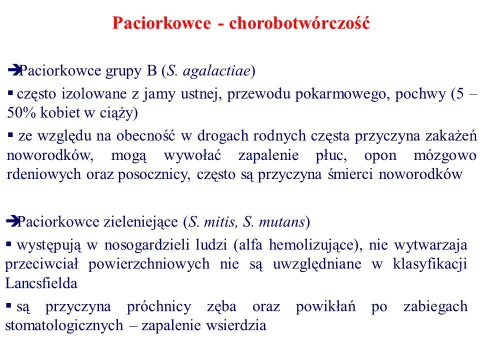 Paciorkowce - chorobotwórczość  Paciorkowce grupy B (S. agalactiae)  często izolowane z jamy ustnej, przewodu pokarmowego, pochwy (5 – 50% kobiet w