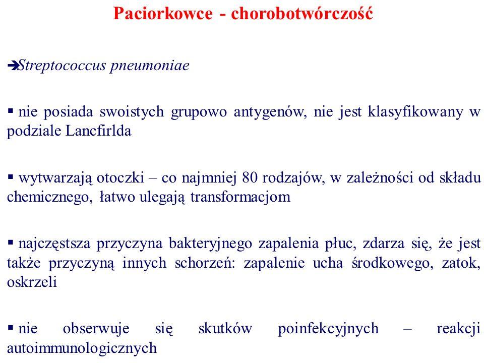 Paciorkowce - chorobotwórczość  Streptococcus pneumoniae  nie posiada swoistych grupowo antygenów, nie jest klasyfikowany w podziale Lancfirlda  wy
