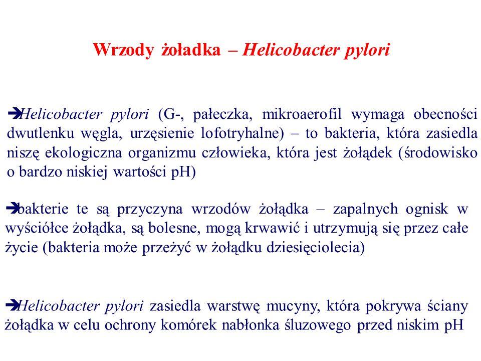 Wrzody żoładka – Helicobacter pylori  Helicobacter pylori (G-, pałeczka, mikroaerofil wymaga obecności dwutlenku węgla, urzęsienie lofotryhalne) – to bakteria, która zasiedla niszę ekologiczna organizmu człowieka, która jest żołądek (środowisko o bardzo niskiej wartości pH)  bakterie te są przyczyna wrzodów żołądka – zapalnych ognisk w wyściółce żołądka, są bolesne, mogą krwawić i utrzymują się przez całe życie (bakteria może przeżyć w żołądku dziesięciolecia)  Helicobacter pylori zasiedla warstwę mucyny, która pokrywa ściany żołądka w celu ochrony komórek nabłonka śluzowego przed niskim pH