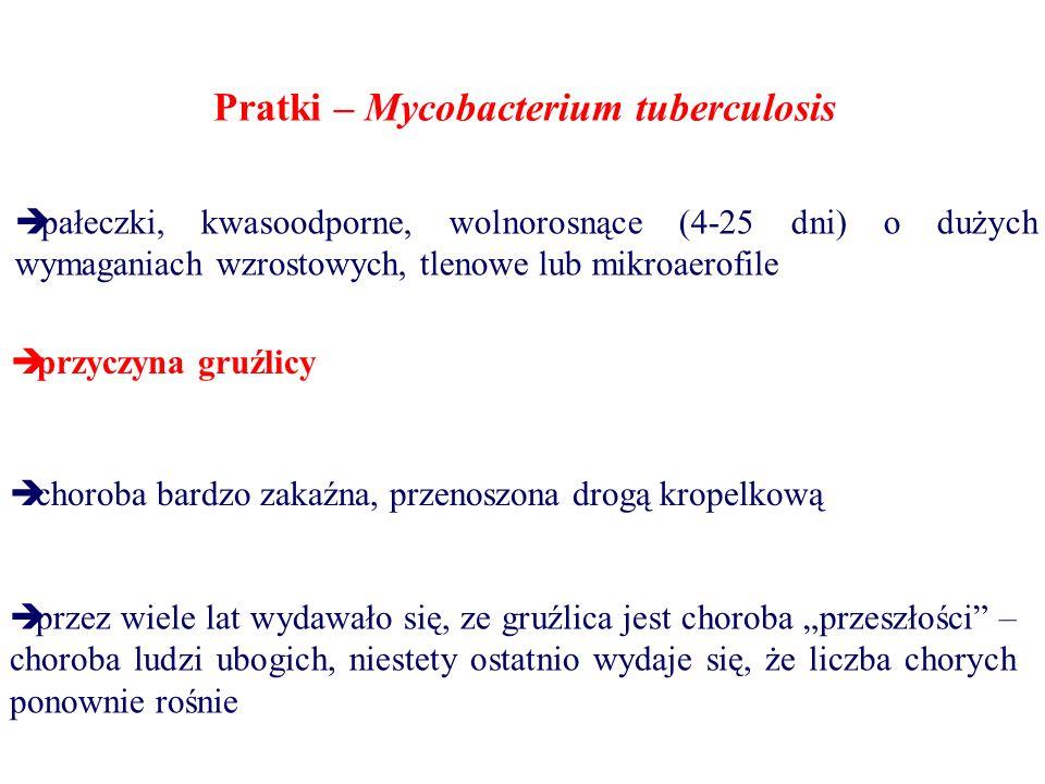 Pratki – Mycobacterium tuberculosis  pałeczki, kwasoodporne, wolnorosnące (4-25 dni) o dużych wymaganiach wzrostowych, tlenowe lub mikroaerofile  pr