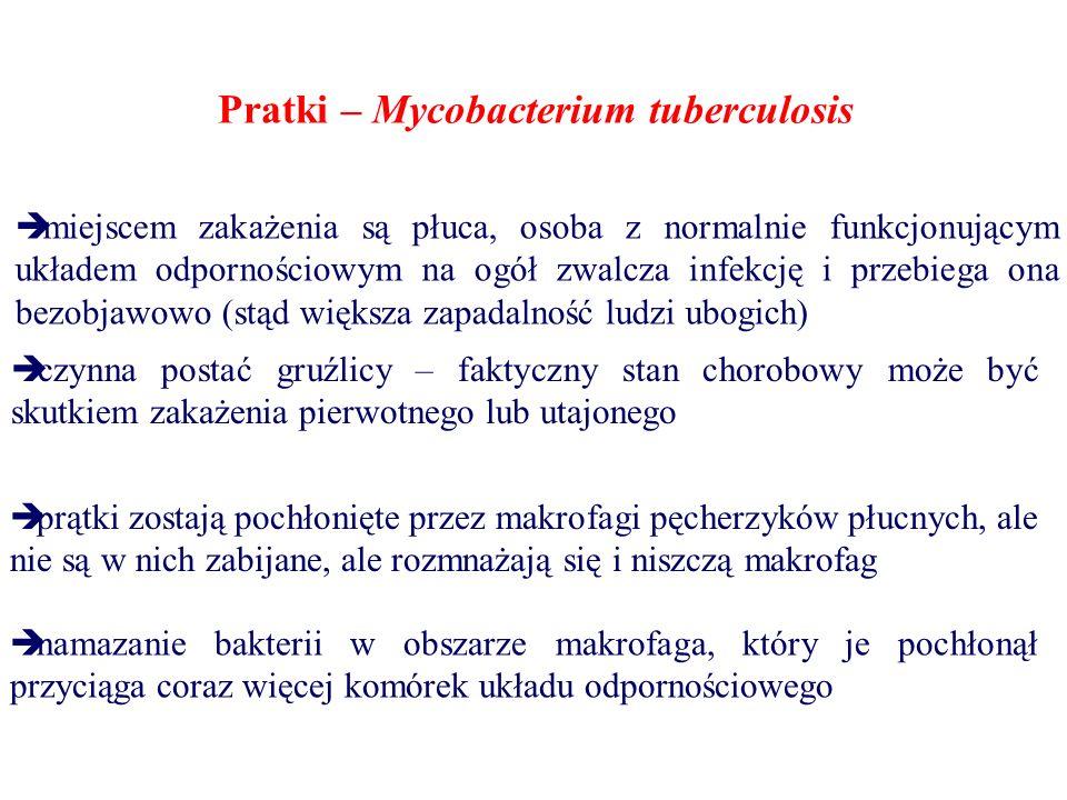Pratki – Mycobacterium tuberculosis  miejscem zakażenia są płuca, osoba z normalnie funkcjonującym układem odpornościowym na ogół zwalcza infekcję i przebiega ona bezobjawowo (stąd większa zapadalność ludzi ubogich)  czynna postać gruźlicy – faktyczny stan chorobowy może być skutkiem zakażenia pierwotnego lub utajonego  prątki zostają pochłonięte przez makrofagi pęcherzyków płucnych, ale nie są w nich zabijane, ale rozmnażają się i niszczą makrofag  namazanie bakterii w obszarze makrofaga, który je pochłonął przyciąga coraz więcej komórek układu odpornościowego