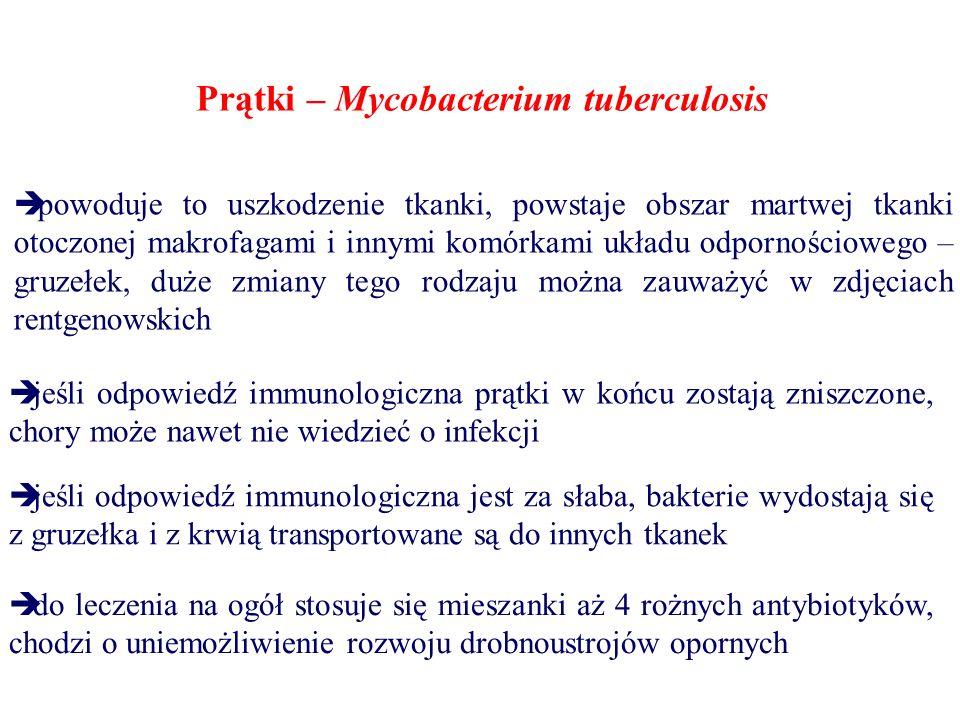 Prątki – Mycobacterium tuberculosis  powoduje to uszkodzenie tkanki, powstaje obszar martwej tkanki otoczonej makrofagami i innymi komórkami układu o
