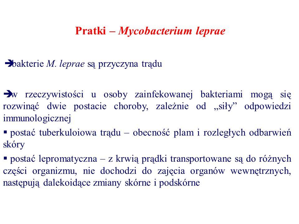 Pratki – Mycobacterium leprae  bakterie M. leprae są przyczyna trądu  w rzeczywistości u osoby zainfekowanej bakteriami mogą się rozwinąć dwie posta