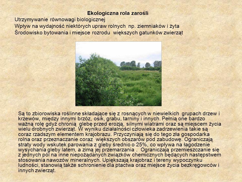Ekologiczna rola zarośli Utrzymywanie równowagi biologicznej Wpływ na wydajność niektórych upraw rolnych np.