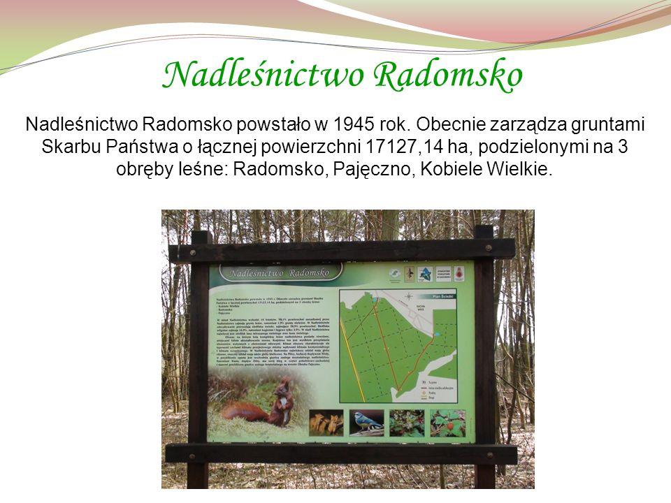 Nadleśnictwo Radomsko Nadleśnictwo Radomsko powstało w 1945 rok.