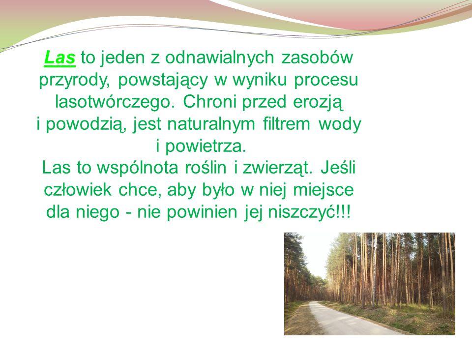 Las to jeden z odnawialnych zasobów przyrody, powstający w wyniku procesu lasotwórczego.
