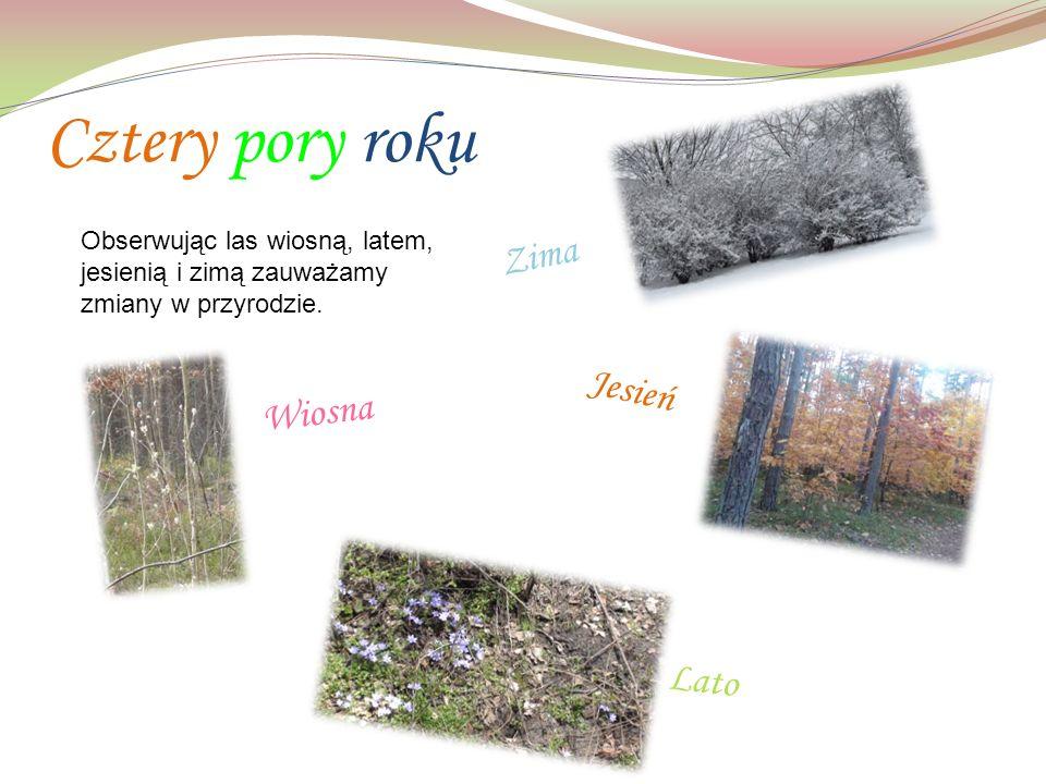 Cztery pory roku Obserwując las wiosną, latem, jesienią i zimą zauważamy zmiany w przyrodzie.
