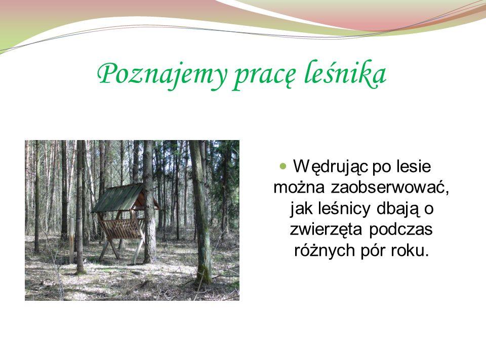 Poznajemy pracę leśnika Wędrując po lesie można zaobserwować, jak leśnicy dbają o zwierzęta podczas różnych pór roku.