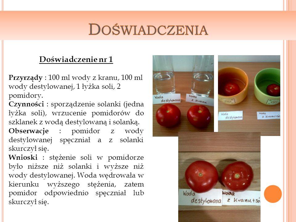 Doświadczenie nr 1 Przyrządy : 100 ml wody z kranu, 100 ml wody destylowanej, 1 łyżka soli, 2 pomidory.