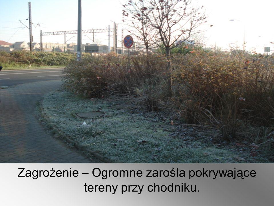 Zagrożenie – Ogromne zarośla pokrywające tereny przy chodniku.