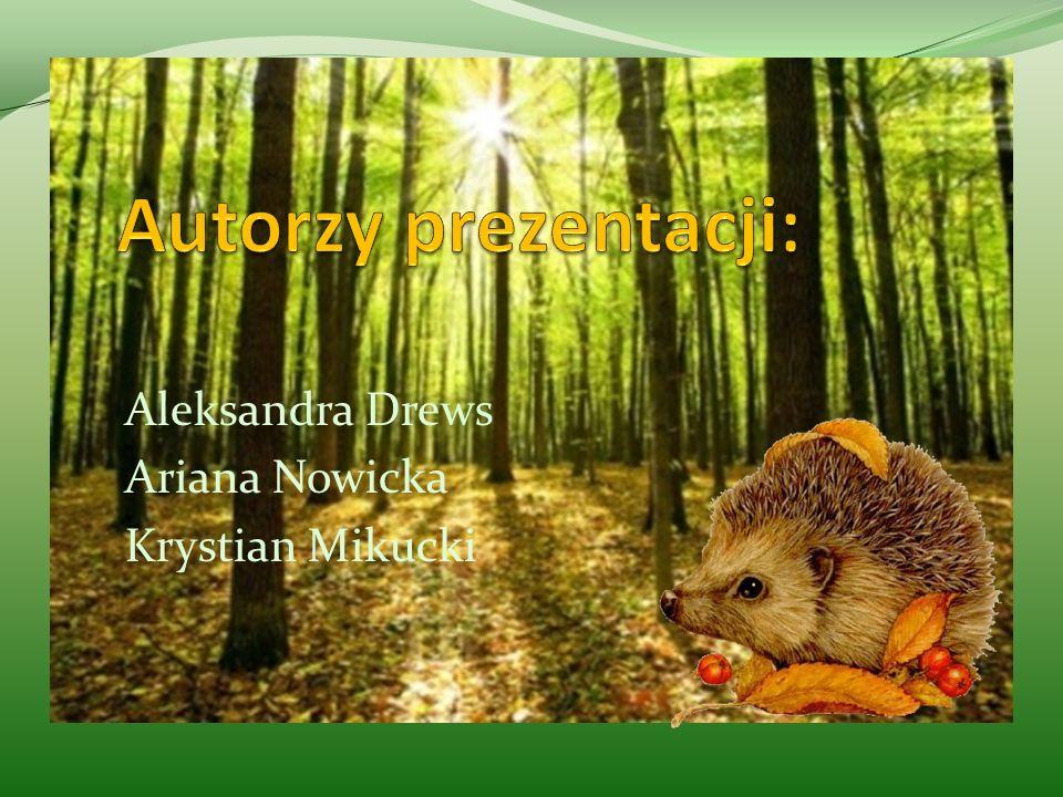 Aleksandra Drews Ariana Nowicka Krystian Mikucki