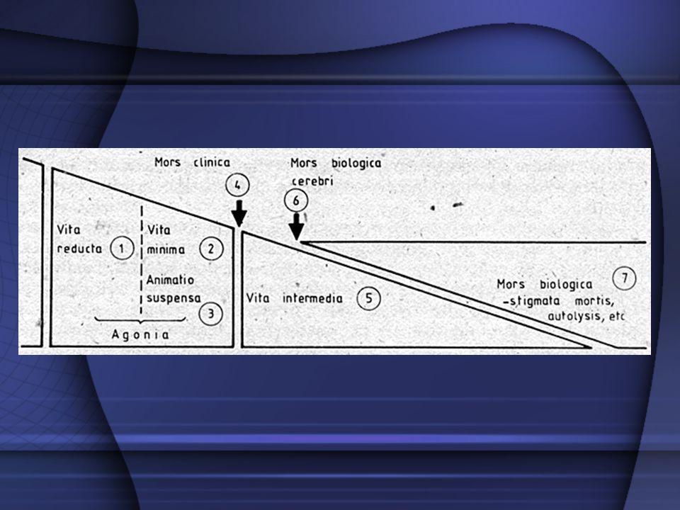 okres interletalny – międzyśmiertny między śmiercią kliniczną a biologiczną zachowana zdolność do reakcji tkanek we właściwy sobie sposób na bodźce mechaniczne, chemiczne, elektryczne (reakcje interletalne – mięśni szkieletowych, źrenic, gruczołów potowych)