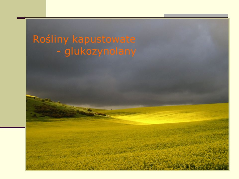 Rośliny kapustowate - glukozynolany