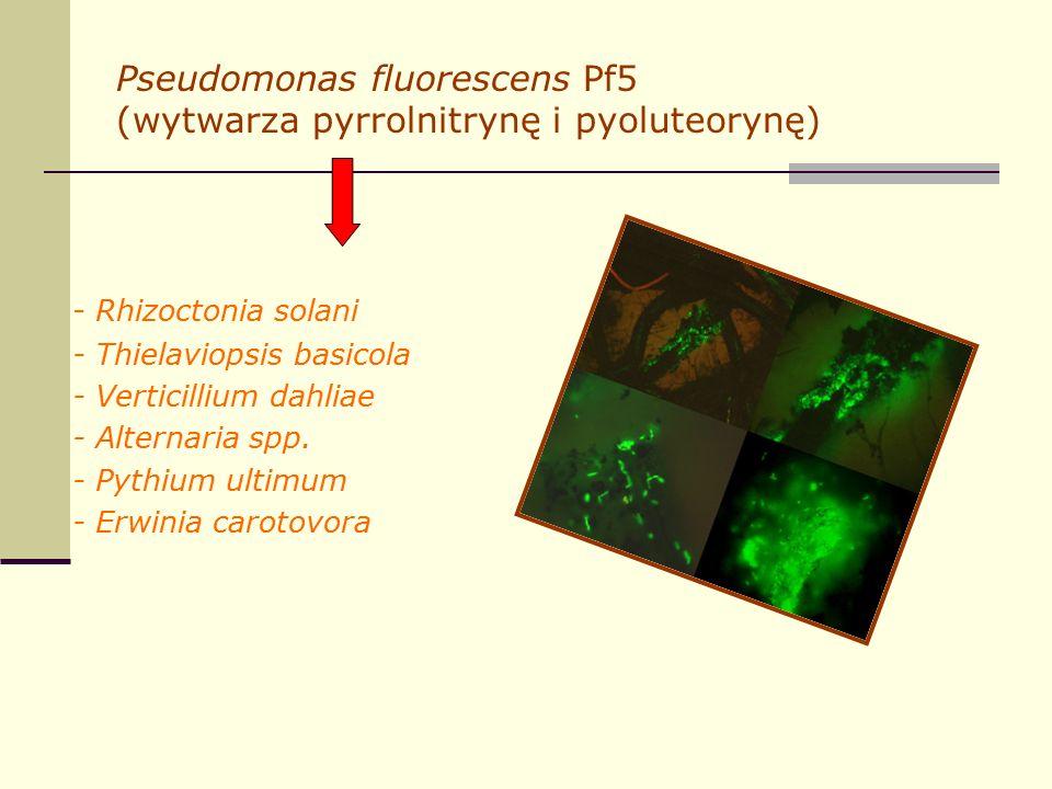 Pseudomonas fluorescens Pf5 (wytwarza pyrrolnitrynę i pyoluteorynę) - Rhizoctonia solani - Thielaviopsis basicola - Verticillium dahliae - Alternaria spp.