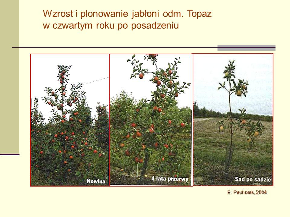 Kombinacja198919901991 Kontrola BACT-1* EBW-4* B-10* B-8** SE 0,50 0,31 0,85* 0,58 0,63 0,09 1,71 1,46 3,59* 2,89 1,85 0,64 4,31 3,64 7,14* 5,04 3,69 0,37 Wpływ bakterii PGPR na plon jabłek z drzew posadzonych do gleby zmęczonej (kg/drzewo ) Utkhede i Smith, 1992 * B.