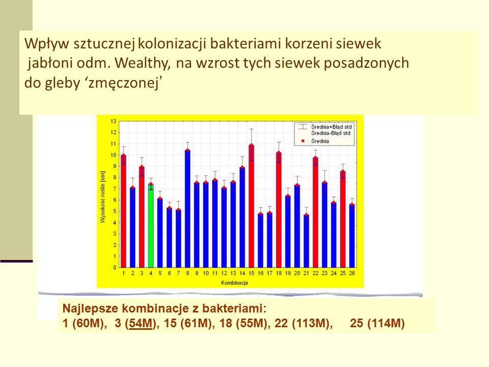 Najlepsze kombinacje z bakteriami: 1 (60M), 3 (54M), 15 (61M), 18 (55M), 22 (113M), 25 (114M) Wpływ sztucznej kolonizacji bakteriami korzeni siewek jabłoni odm.