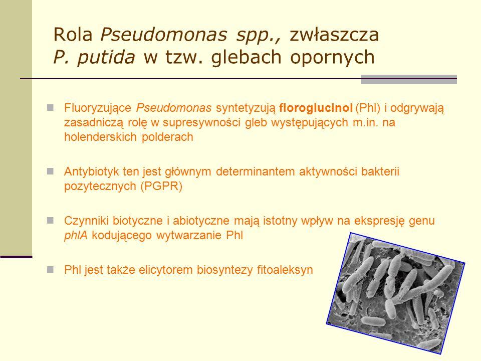 Rola Pseudomonas spp., zwłaszcza P. putida w tzw.