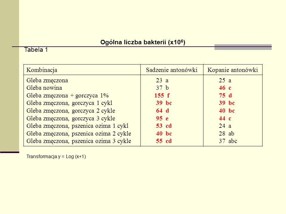 Ogólna liczba bakterii (x10 6 ) Tabela 1 KombinacjaSadzenie antonówkiKopanie antonówki Gleba zmęczona Gleba nowina Gleba zmęczona + gorczyca 1% Gleba zmęczona, gorczyca 1 cykl Gleba zmęczona, gorczyca 2 cykle Gleba zmęczona, gorczyca 3 cykle Gleba zmęczona, pszenica ozima 1 cykl Gleba zmęczona, pszenica ozima 2 cykle Gleba zmęczona, pszenica ozima 3 cykle 23 a 37 b 155 f 39 bc 64 d 95 e 53 cd 40 bc 55 cd 25 a 46 c 75 d 39 bc 40 bc 44 c 24 a 28 ab 37 abc Transformacja y = Log (x+1)