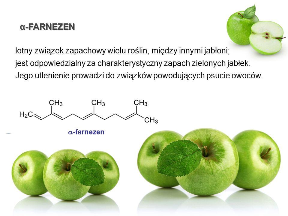 α-FARNEZEN lotny związek zapachowy wielu roślin, między innymi jabłoni; jest odpowiedzialny za charakterystyczny zapach zielonych jabłek. Jego utlenie