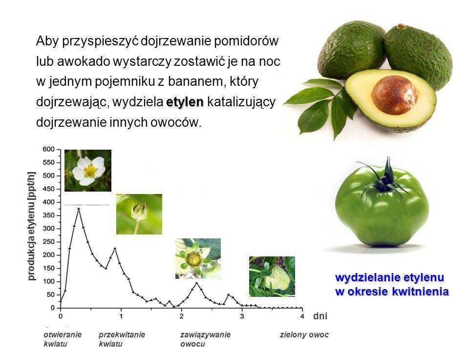 etylen Aby przyspieszyć dojrzewanie pomidorów lub awokado wystarczy zostawić je na noc w jednym pojemniku z bananem, który dojrzewając, wydziela etyle