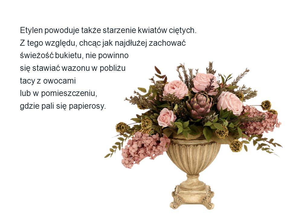 Etylen powoduje także starzenie kwiatów ciętych. Z tego względu, chcąc jak najdłużej zachować świeżość bukietu, nie powinno się stawiać wazonu w pobli