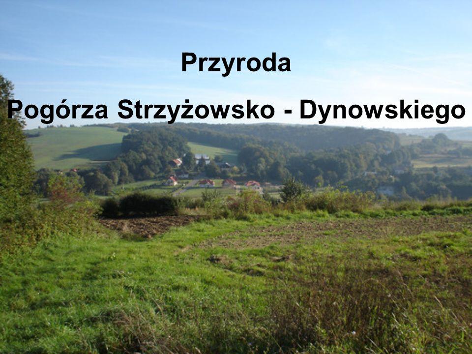 Przyroda Pogórza Strzyżowsko - Dynowskiego
