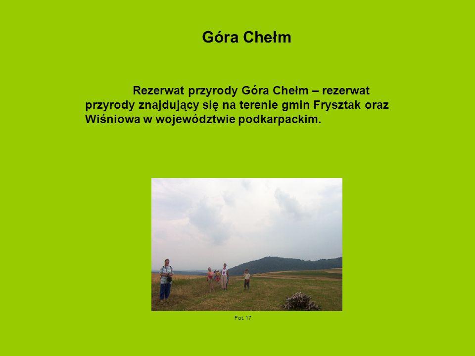 Góra Chełm Rezerwat przyrody Góra Chełm – rezerwat przyrody znajdujący się na terenie gmin Frysztak oraz Wiśniowa w województwie podkarpackim.