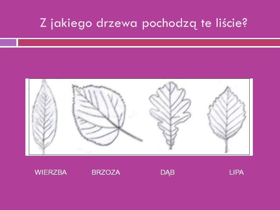 Z jakiego drzewa pochodzą te liście WIERZBA BRZOZA DĄB LIPA