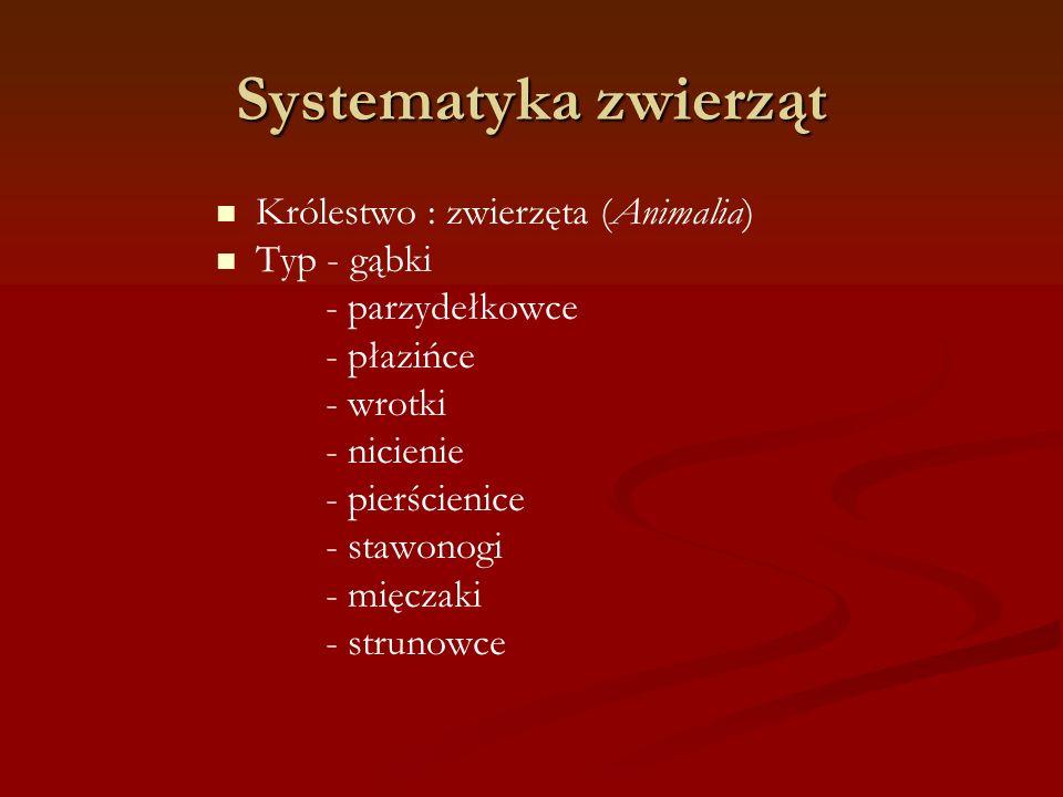 Systematyka zwierząt Królestwo : zwierzęta (Animalia) Typ - gąbki - parzydełkowce - płazińce - wrotki - nicienie - pierścienice - stawonogi - mięczaki
