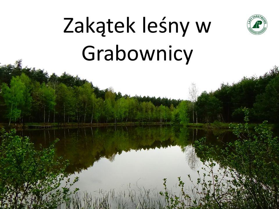 Zakątek leśny w Grabownicy