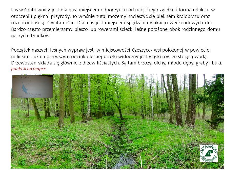 Las w Grabownicy jest dla nas miejscem odpoczynku od miejskiego zgiełku i formą relaksu w otoczeniu piękna przyrody.