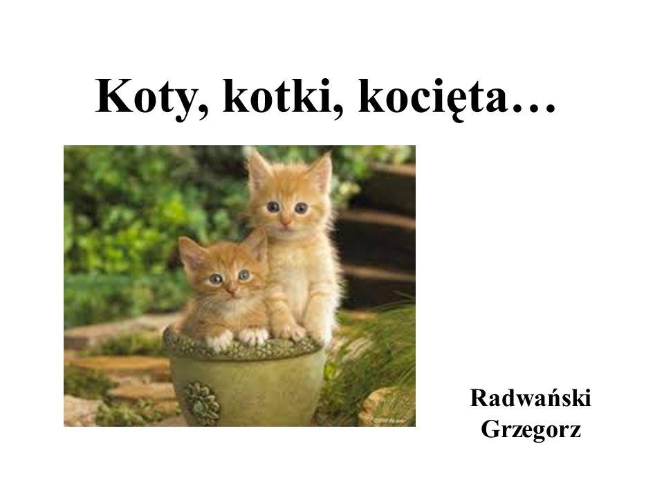 Kot domowy - udomowiony gatunek ssaka z rzędu drapieżnych z rodziny kotowatych.