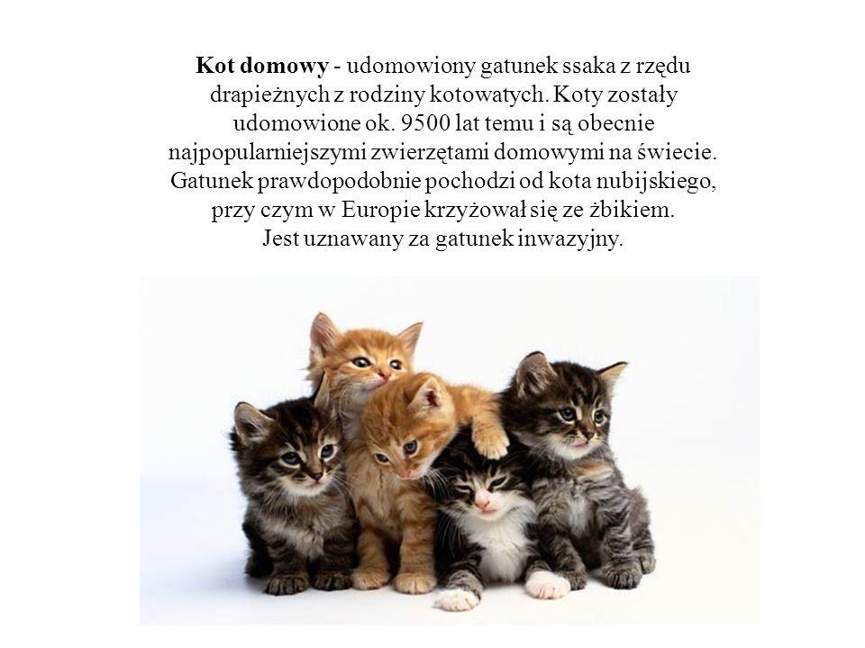 Kot domowy - udomowiony gatunek ssaka z rzędu drapieżnych z rodziny kotowatych. Koty zostały udomowione ok. 9500 lat temu i są obecnie najpopularniejs