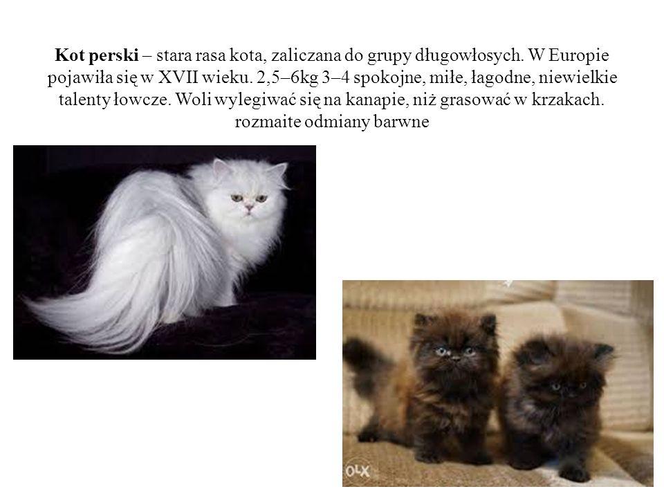 Kot perski – stara rasa kota, zaliczana do grupy długowłosych. W Europie pojawiła się w XVII wieku. 2,5–6kg 3–4 spokojne, miłe, łagodne, niewielkie ta