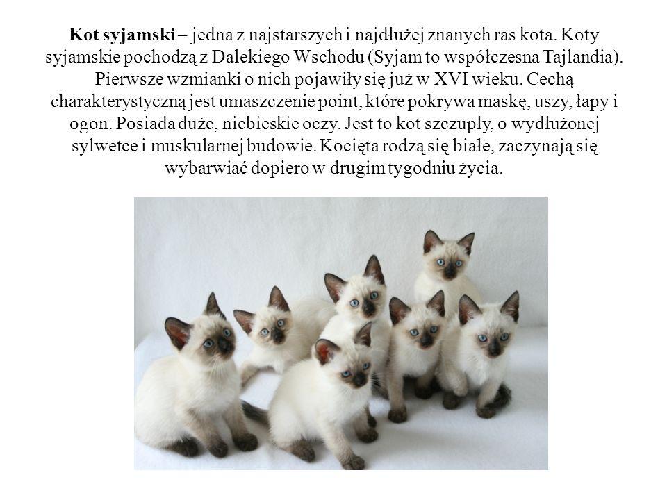 Kot syjamski – jedna z najstarszych i najdłużej znanych ras kota. Koty syjamskie pochodzą z Dalekiego Wschodu (Syjam to współczesna Tajlandia). Pierws