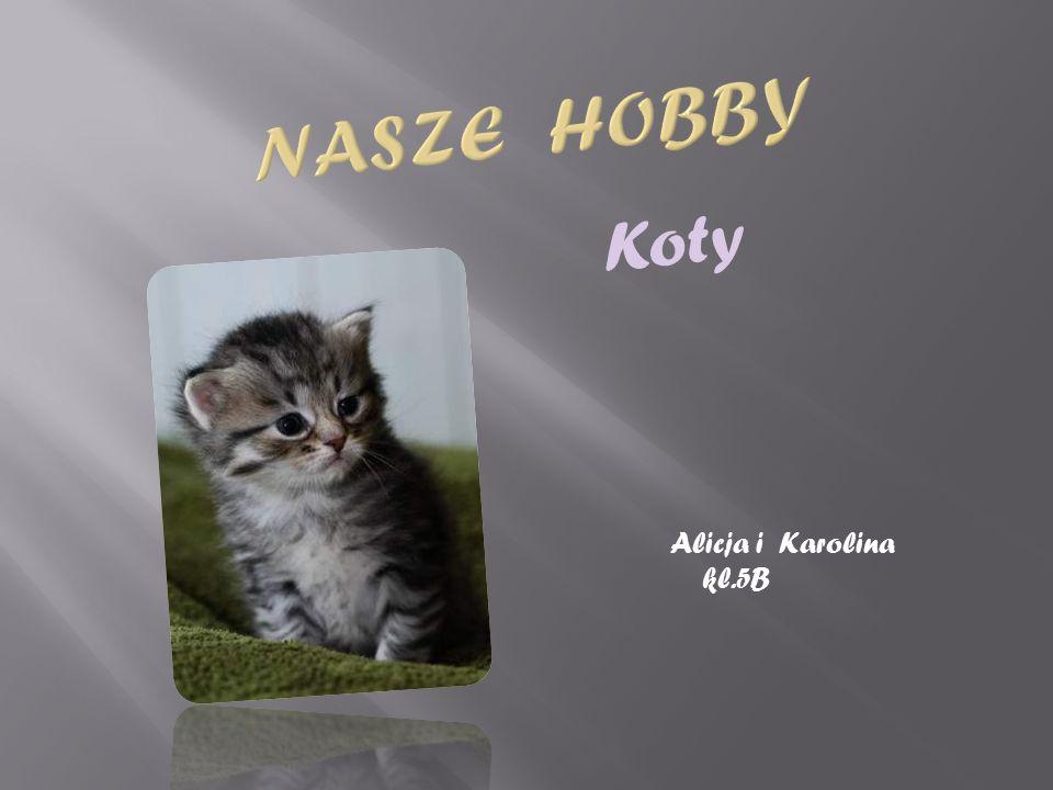 Historia kota domowego : Rodzina kotowatych należy do rzędu ssaków drapieżnych I dzieli się na dwa gatunki – Starego i Nowego Świata.