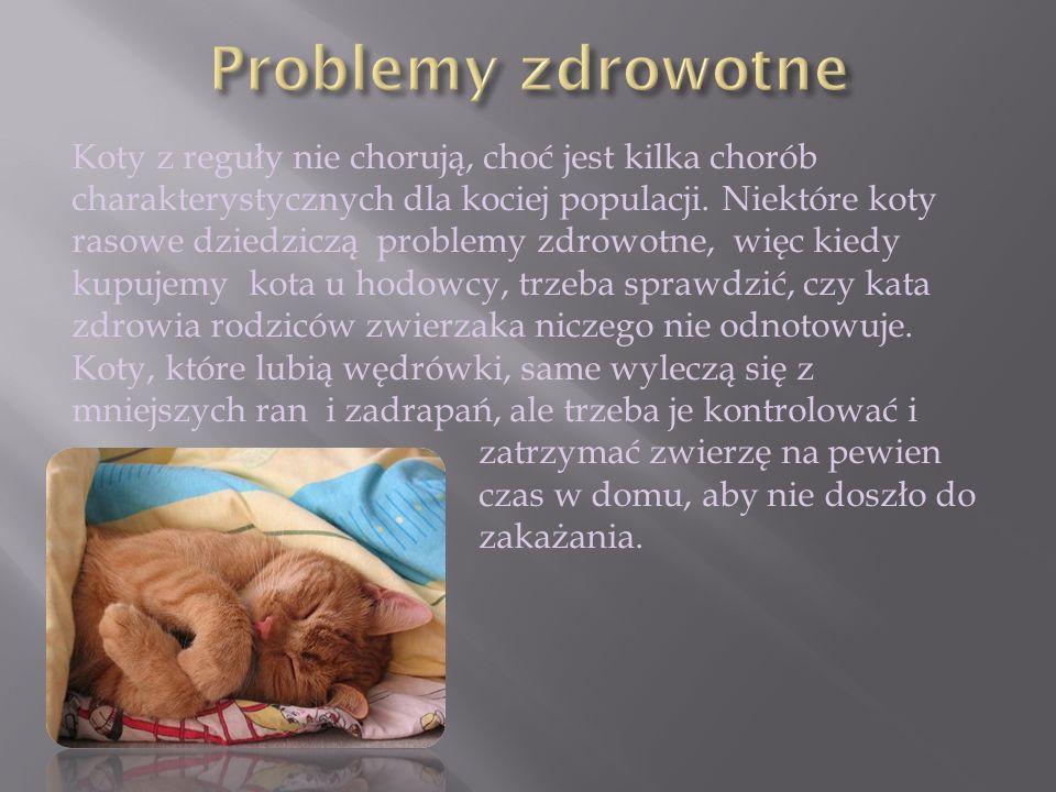 Koty z reguły nie chorują, choć jest kilka chorób charakterystycznych dla kociej populacji. Niektóre koty rasowe dziedziczą problemy zdrowotne, więc k