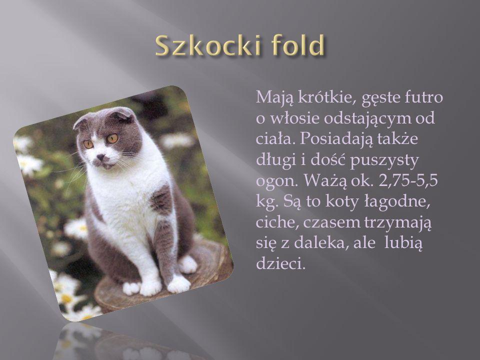 Mają krótkie, gęste futro o włosie odstającym od ciała. Posiadają także długi i dość puszysty ogon. Ważą ok. 2,75-5,5 kg. Są to koty łagodne, ciche, c