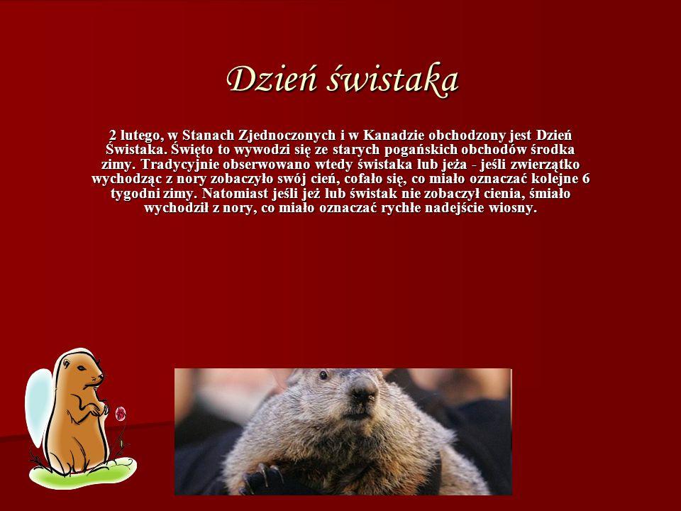 Dzień świstaka 2 lutego, w Stanach Zjednoczonych i w Kanadzie obchodzony jest Dzień Świstaka.