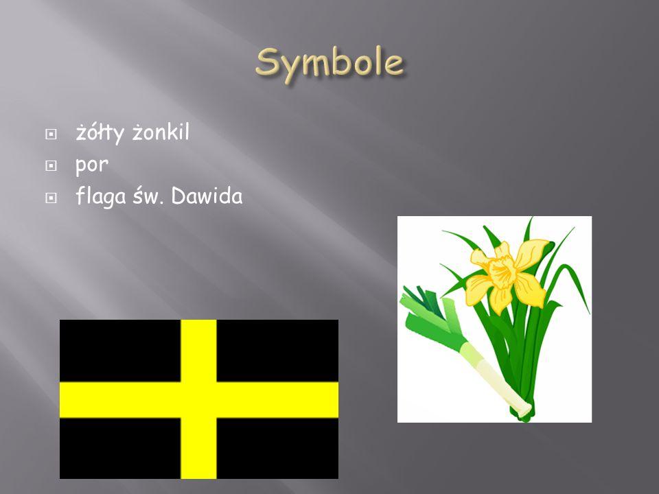  żółty żonkil  por  flaga św. Dawida