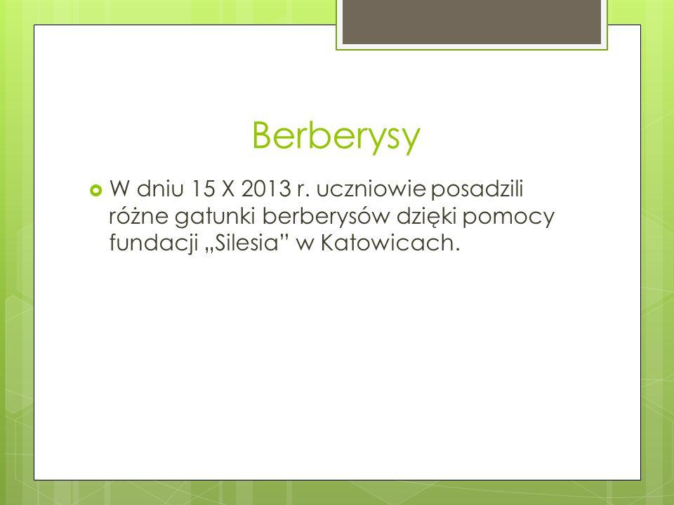 """Berberysy  W dniu 15 X 2013 r. uczniowie posadzili różne gatunki berberysów dzięki pomocy fundacji """"Silesia"""" w Katowicach."""