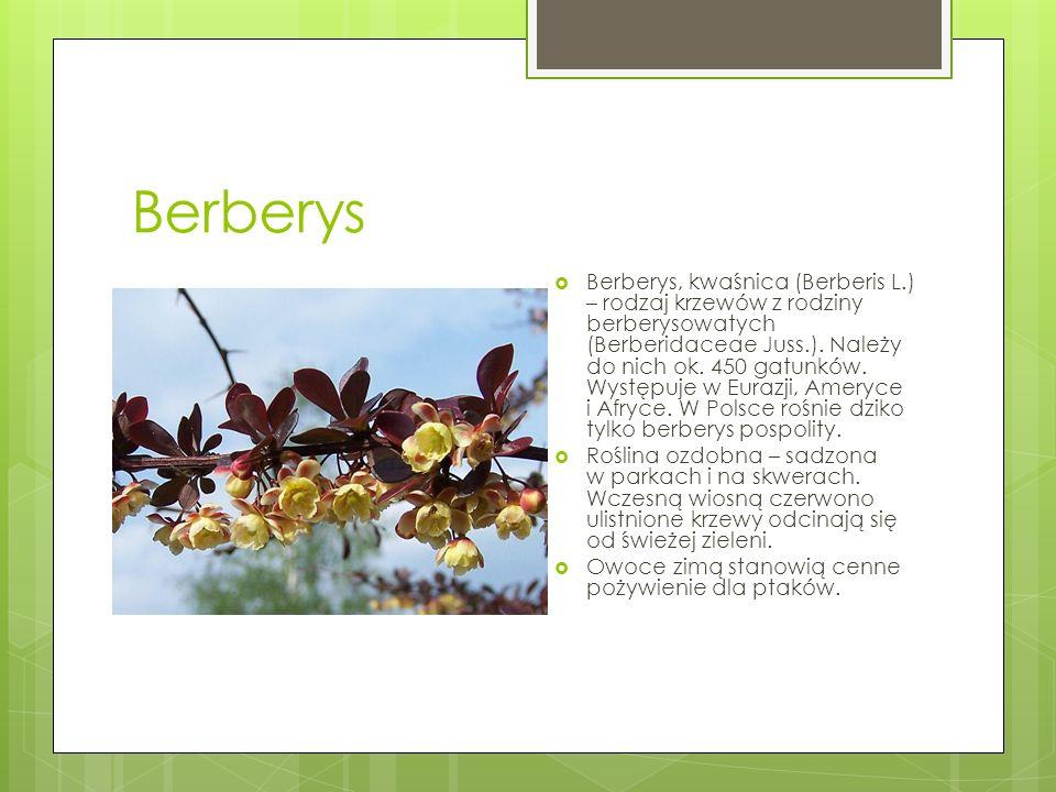 Berberys  Berberys, kwaśnica (Berberis L.) – rodzaj krzewów z rodziny berberysowatych (Berberidaceae Juss.). Należy do nich ok. 450 gatunków. Występu