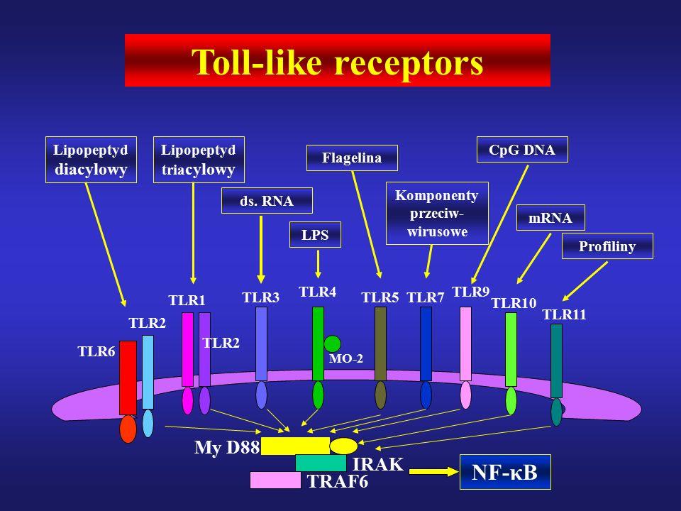 TLR6 TLR2 TLR1 TLR2 TLR3 TLR4 MO-2 TLR5TLR7 TLR9 TLR10 TLR11 Toll-like receptors Lipopeptyd diacylowy Lipopeptyd tria cylowy ds.