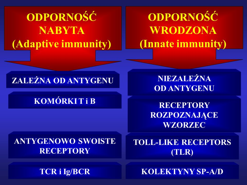 ODPORNOŚĆ WRODZONA I NABYTA CD14 TLR2 PPG TLR4 LPSLPS IKB NFκB Aktywacja Trnskrypcja MHC II CD83 CD86 Kostymulacja APC CD28 TCR LIMFOCYT T